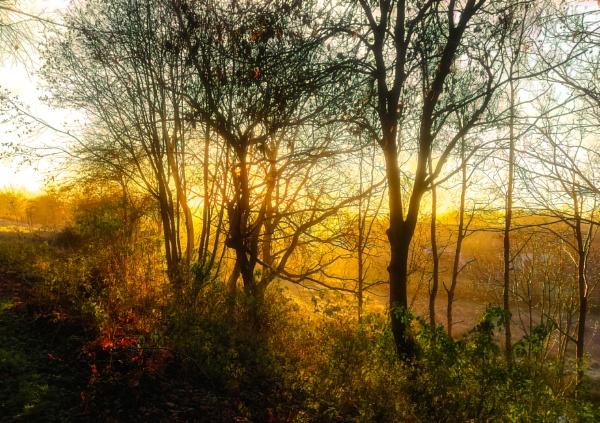 Sun Arise by scrimmy