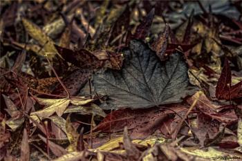 Black Leaves Matter