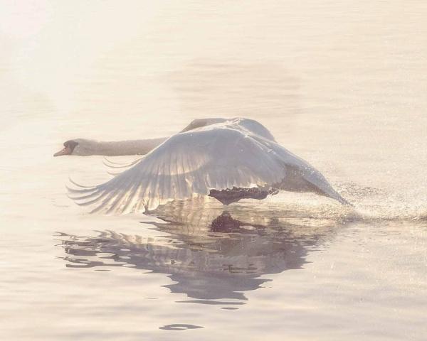 Wings by sweetpea62