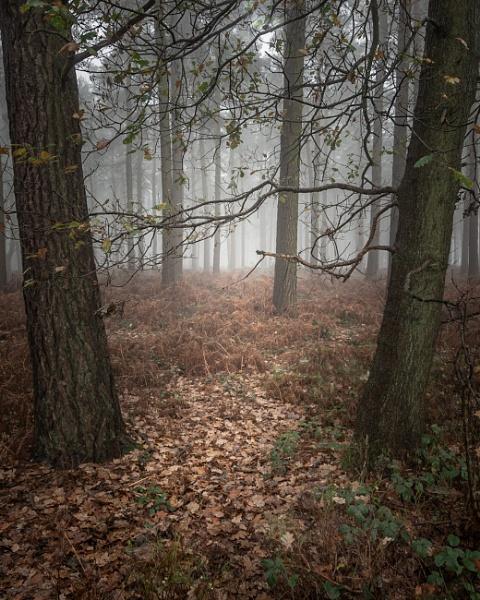 Mystical forest by soulsharer
