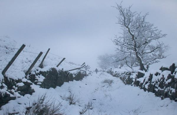 First snow by michaelfox