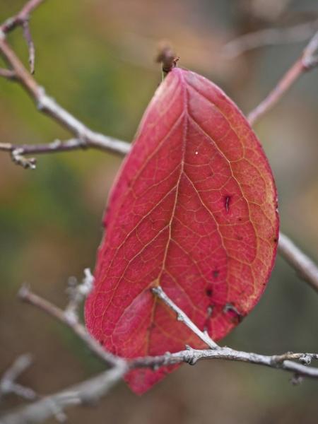 Colors of Fall #1 by handlerstudio