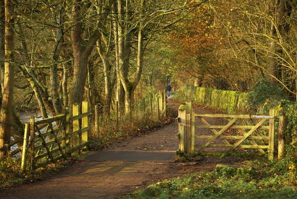 Autumn Walk by Trevhas