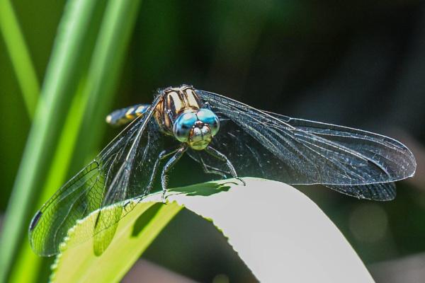 Blue eyes !! by Coen