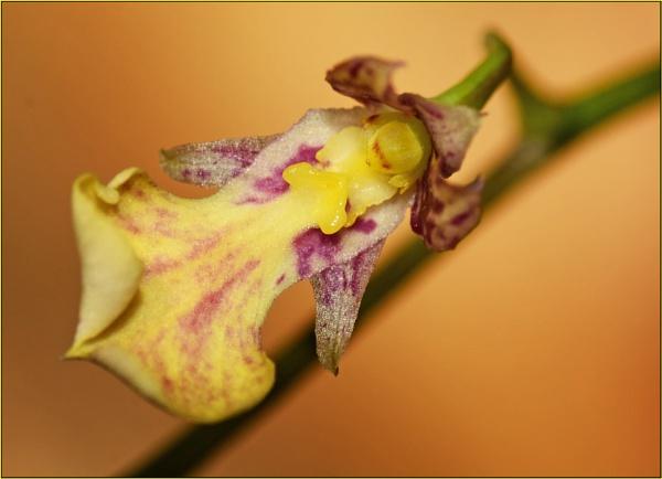 What species please ? by fotobee