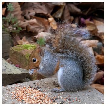 Squirrel ?