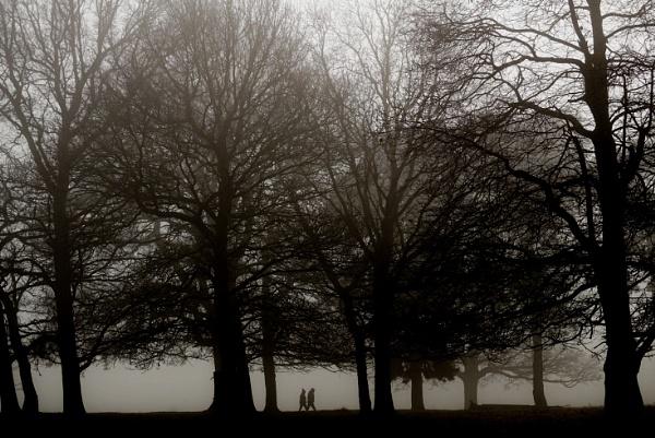Bushy Park in the mist by jomangabey