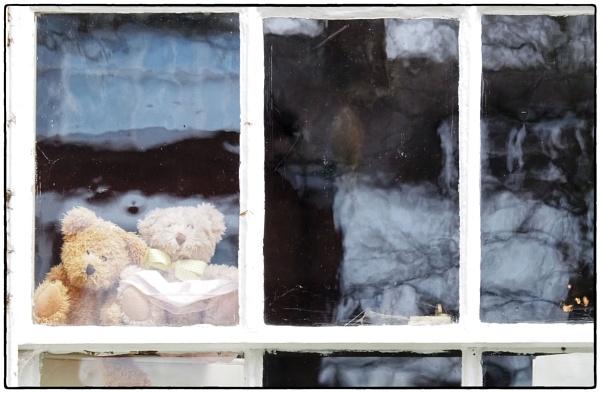 Silly Sunday - Lockdown Bears by DaveRyder