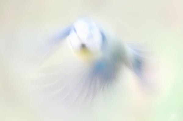 Blur Tit by Alffoto