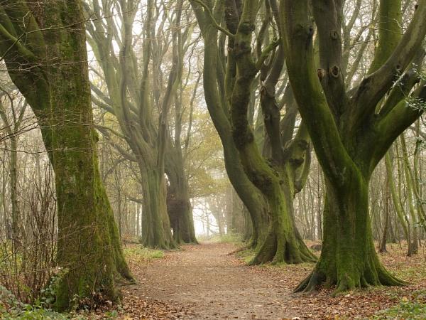 woodland way 2 by alfpics
