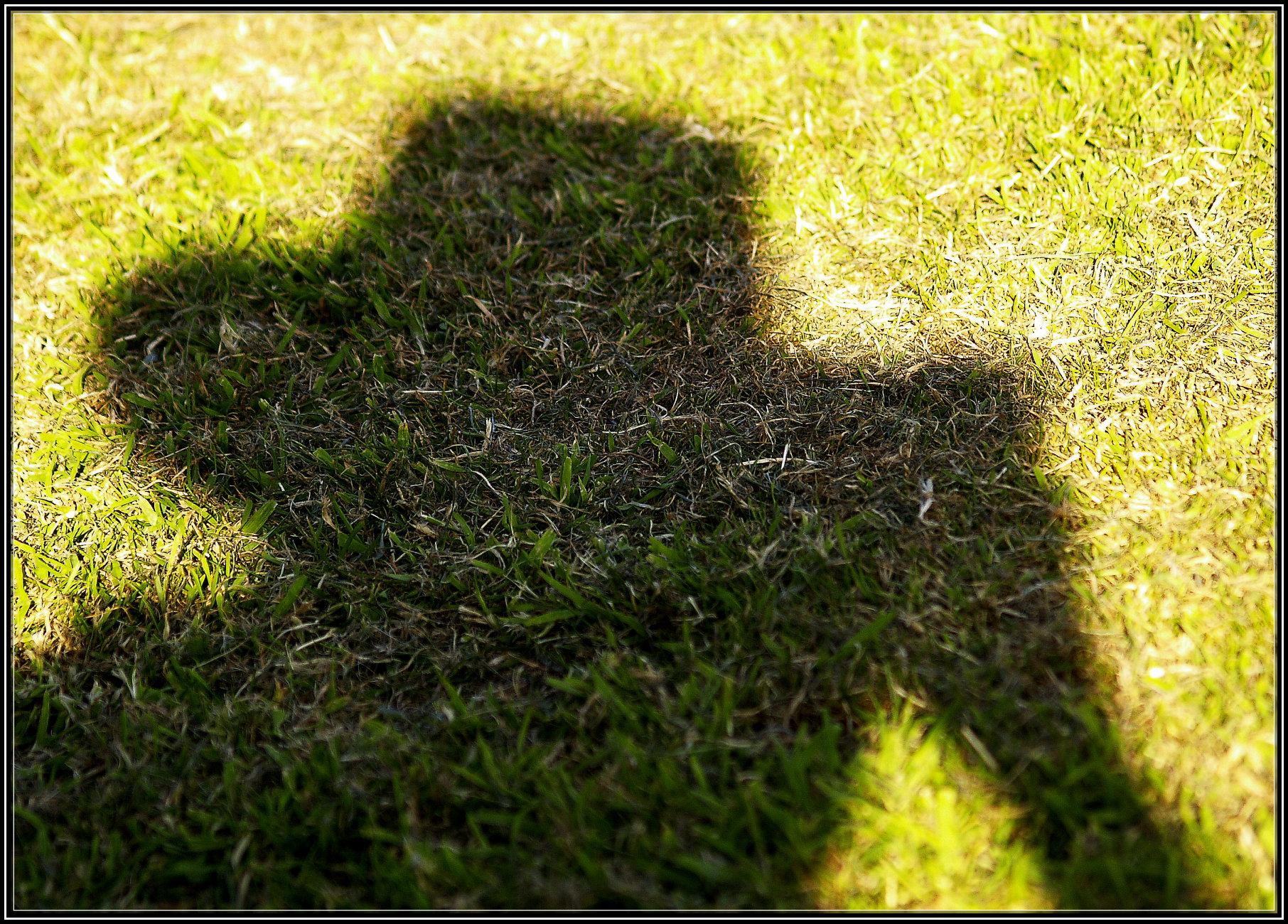 Self Portrait for Shadow Saturday