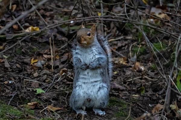 Squirrel by terra