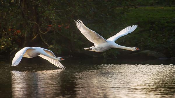 Winged Pair by chensuriashi
