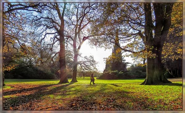 Late Autumn Sun by Sylviwhalley