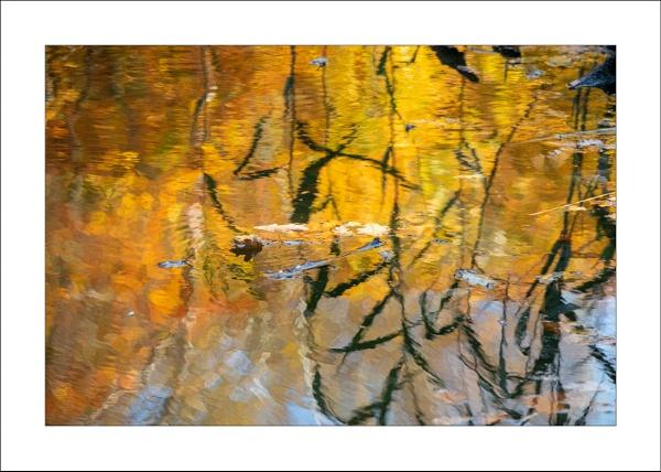 Stallon Pond by Steve-T