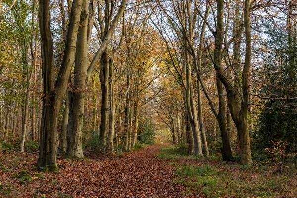 Footpath through Sawyer\'s Wood by tonybridge