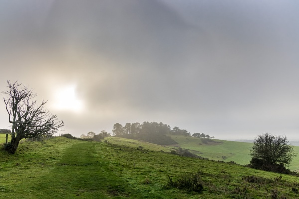 Sunlight in the fog, Penbury Knoll by tonybridge