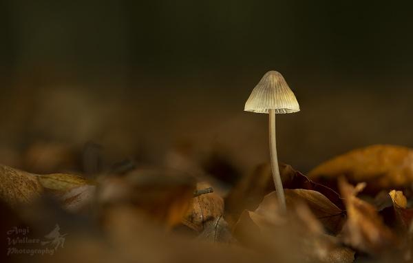 Fungi by Angi_Wallace