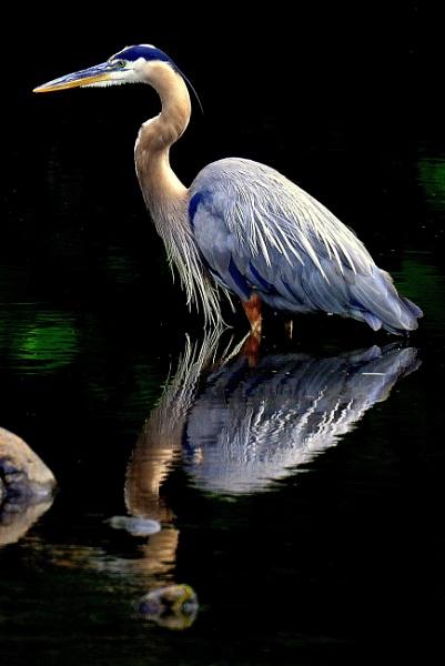 Reflection Pool by joesav