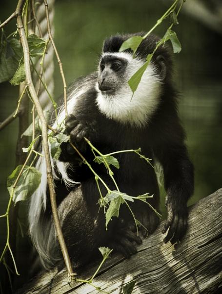 monkey by tpfkapm