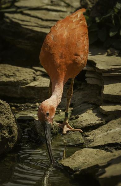bird by tpfkapm