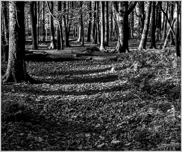 Woodland Walk by mac