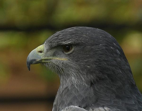 Grey by nealie