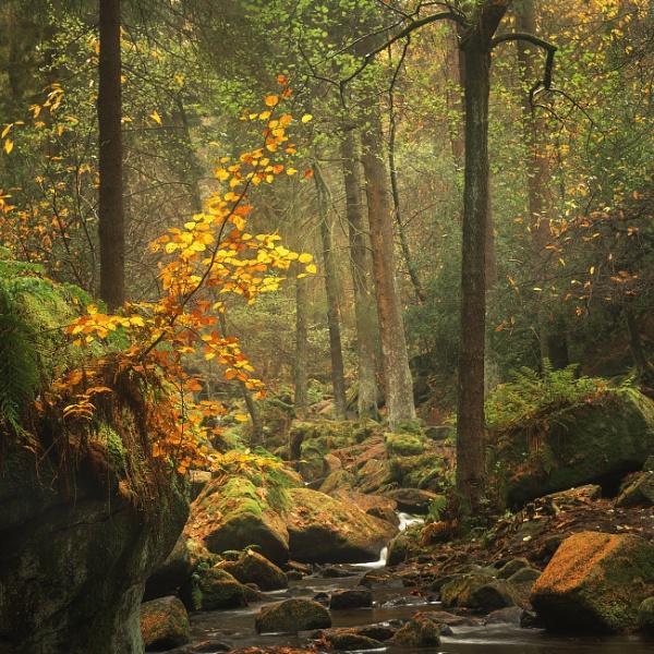 Autumn Glow by Trevhas