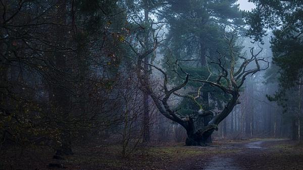 old dead tree by rocky41
