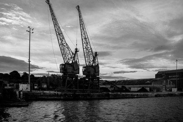 Cranes In Mono by woodini254