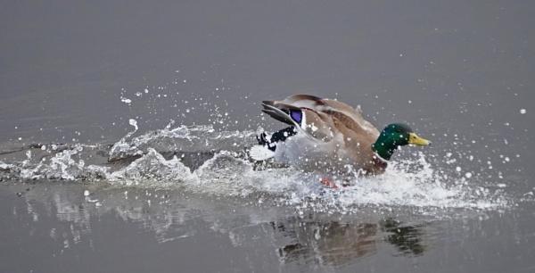 Splashdown by guern