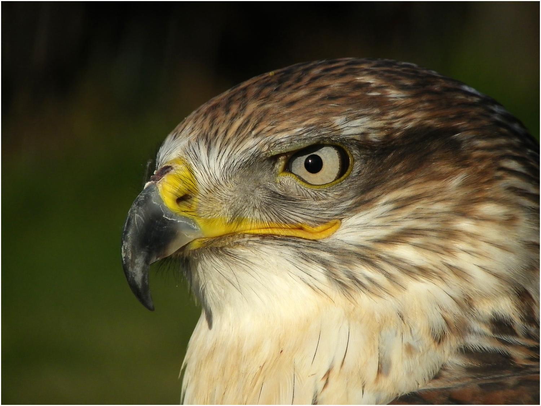 The Eye and the Beak