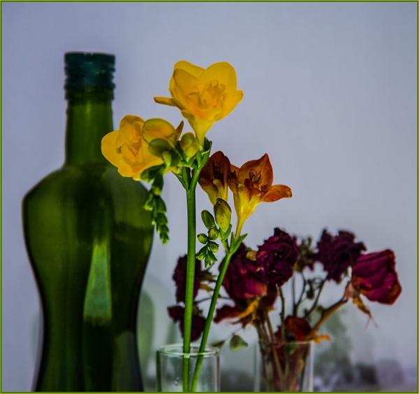 empty green bottle... by estonian