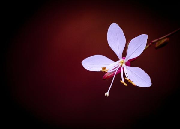 Petal of blooming flower in garden by rninov