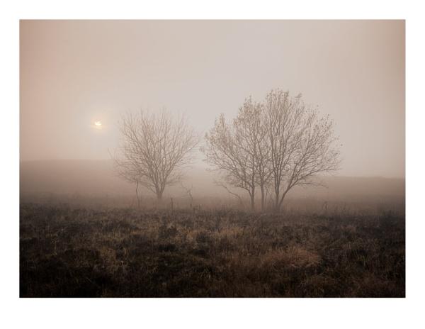 Half Light by gerainte1