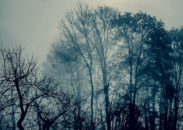 Lost in the Fog by LoryC