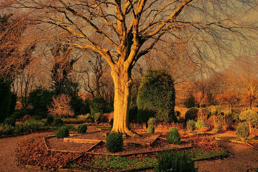 """""""A Beech Tree in December""""."""