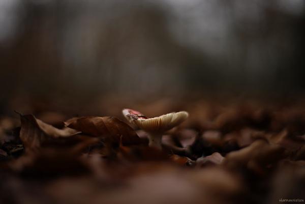 Darkness Gathering by HarmanNielsen