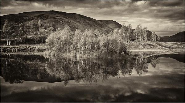 Silver Birches by MalcolmM