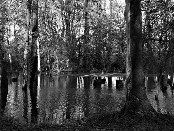 flooded gardens by GwB