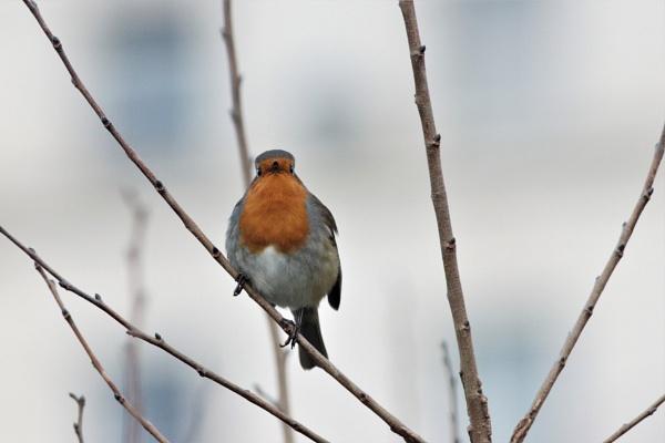Early Bird by mark90d