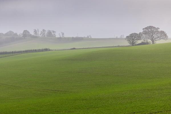 Misty afternoon on Cranborne Chase by tonybridge