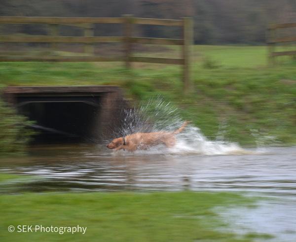 Doggy splash by SusanKing