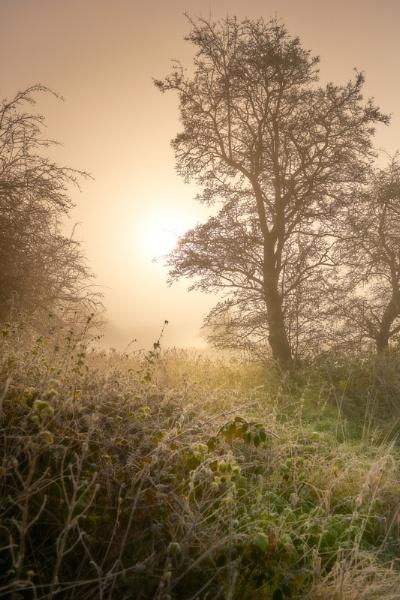 Morning by alankarl
