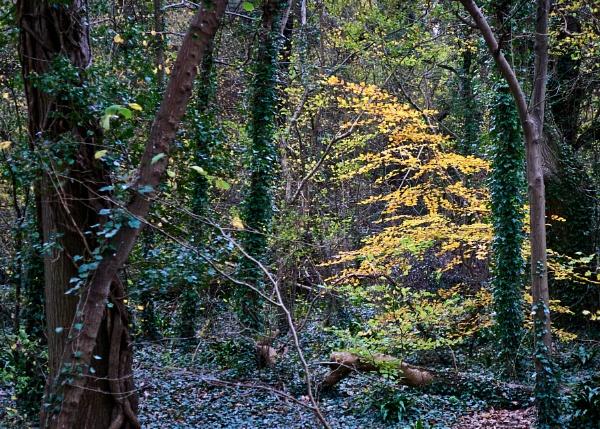 A few leaves left ... by Meditator