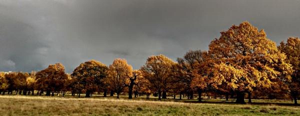 Shades of Grey & Autumn by nicbone
