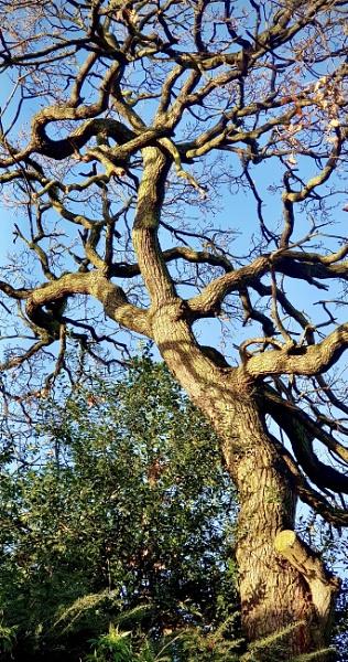 Sunny Oak by nclark