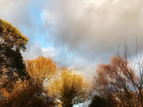 Sunday sunshine by dudler