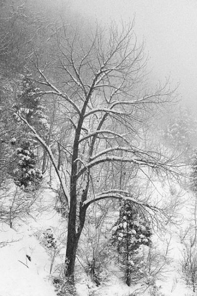 Trees in Winter by mlseawell