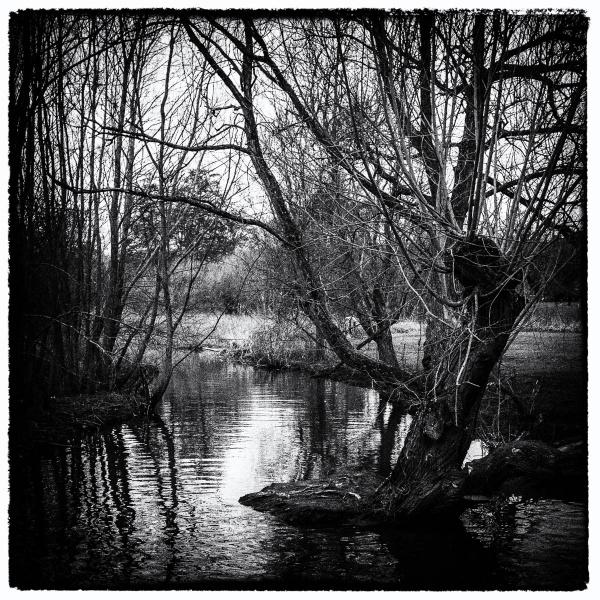 A Stream by RolandC